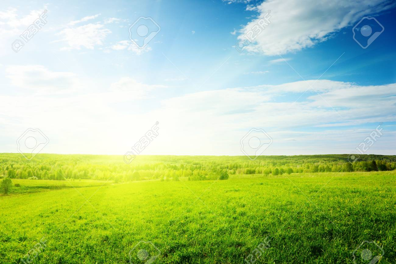 spring green field of grass Stock Photo - 5523417