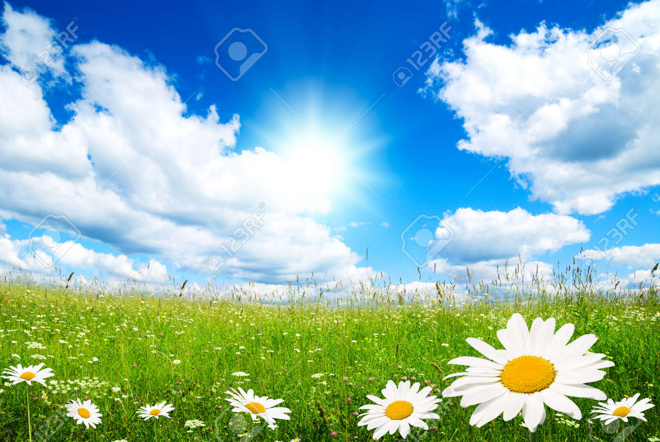 field of summer flowers and perfect sky Stock Photo - 5801103