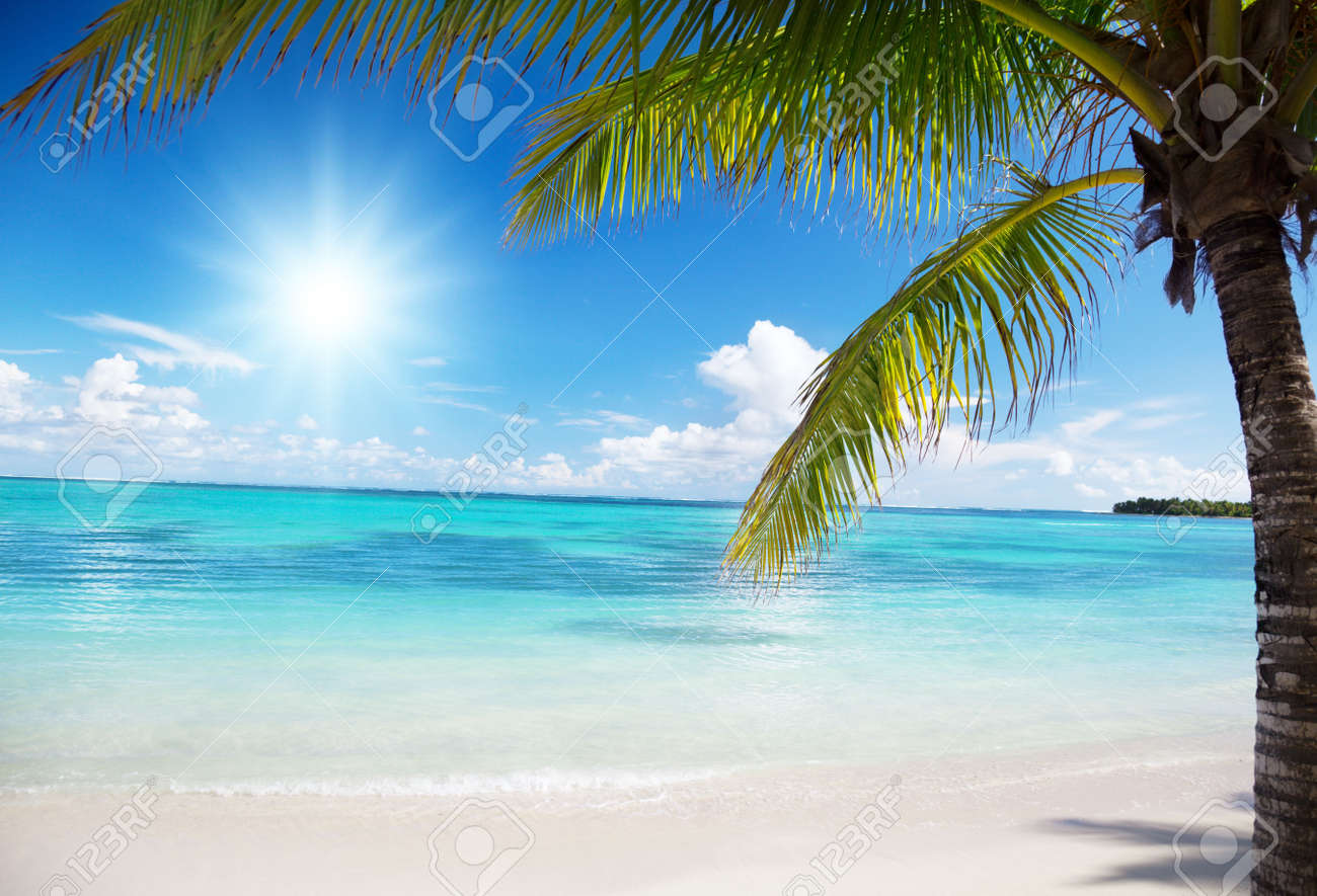 ocean and coconut palms Stock Photo - 5965476