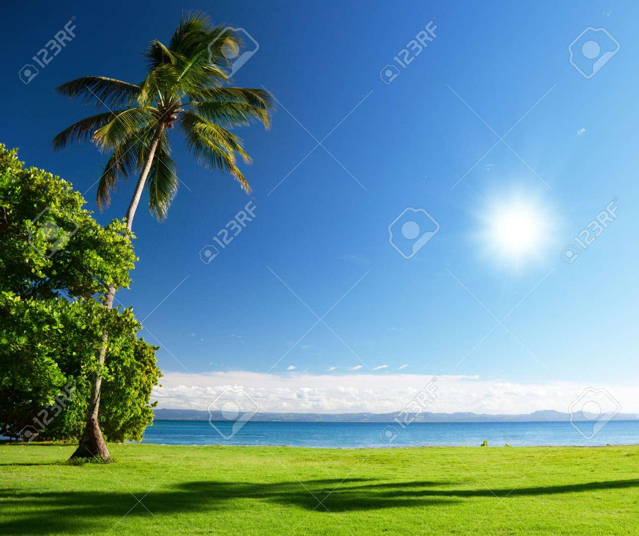 caribbean sea and palms Stock Photo - 6482340