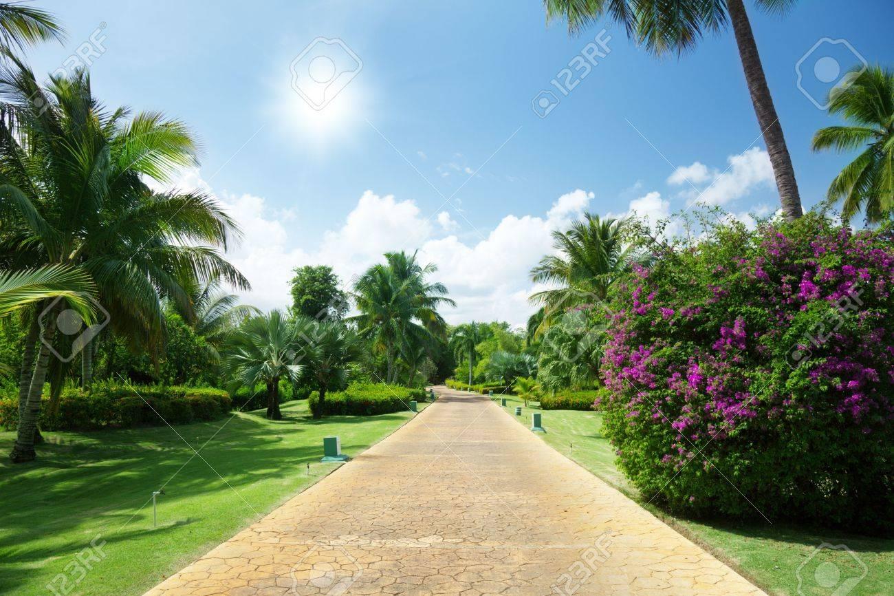 road in tropical garden - 6545179