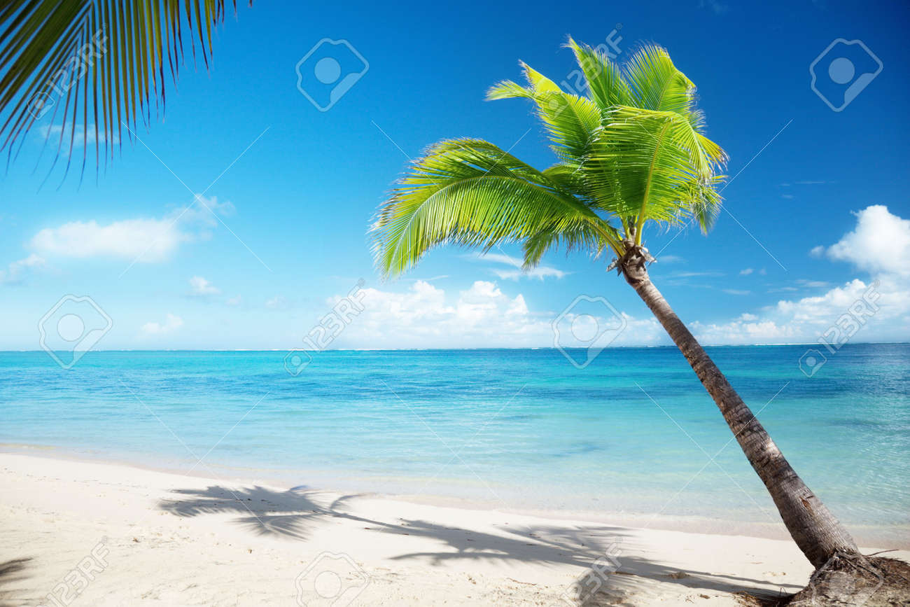 Caribbean sea and coconut palm Stock Photo - 6545194