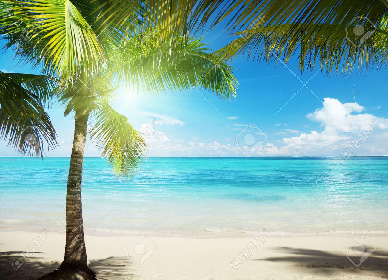 Caribbean prons sexy scenes