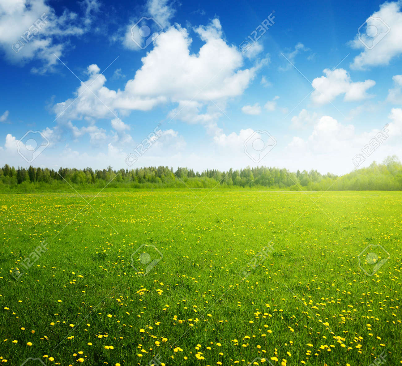 field of spring flowers and perfect sky Stock Photo - 6738198