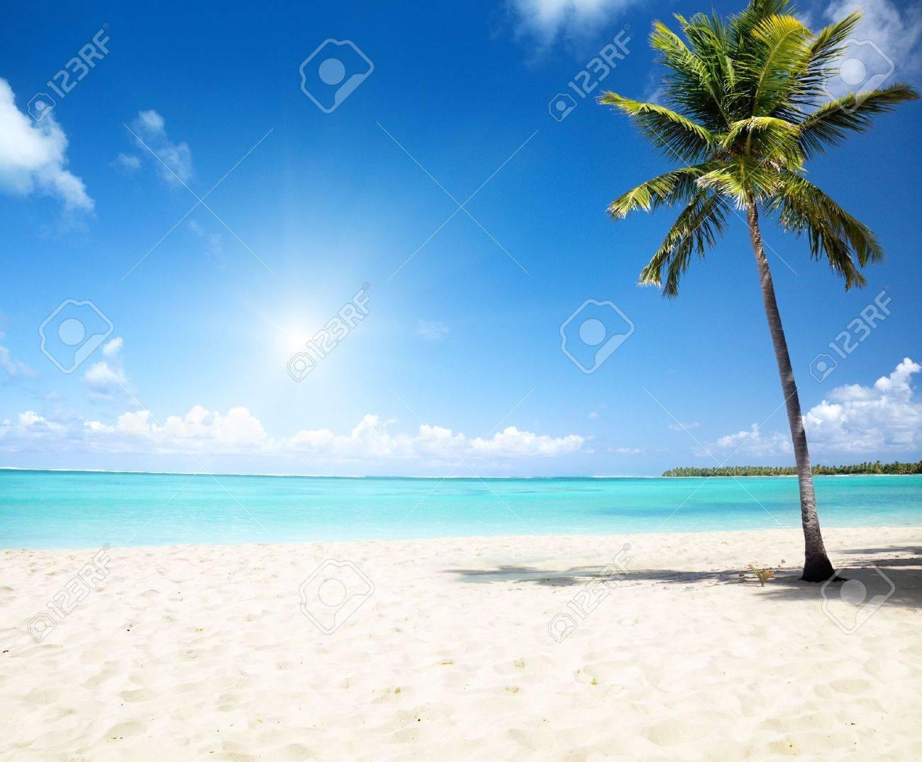 sea and coconut palm Stock Photo - 6976631