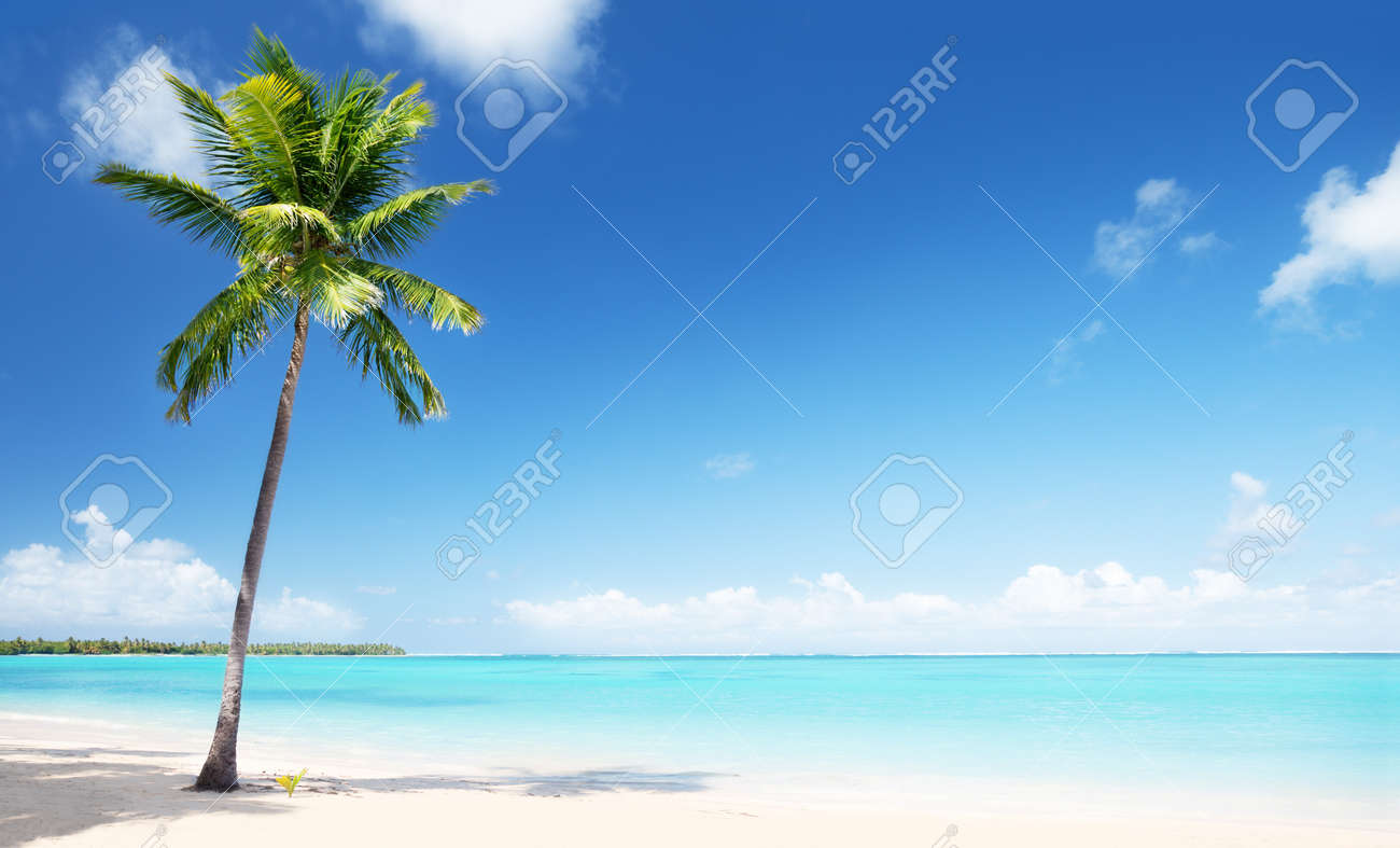 palm and beach Stock Photo - 7577361