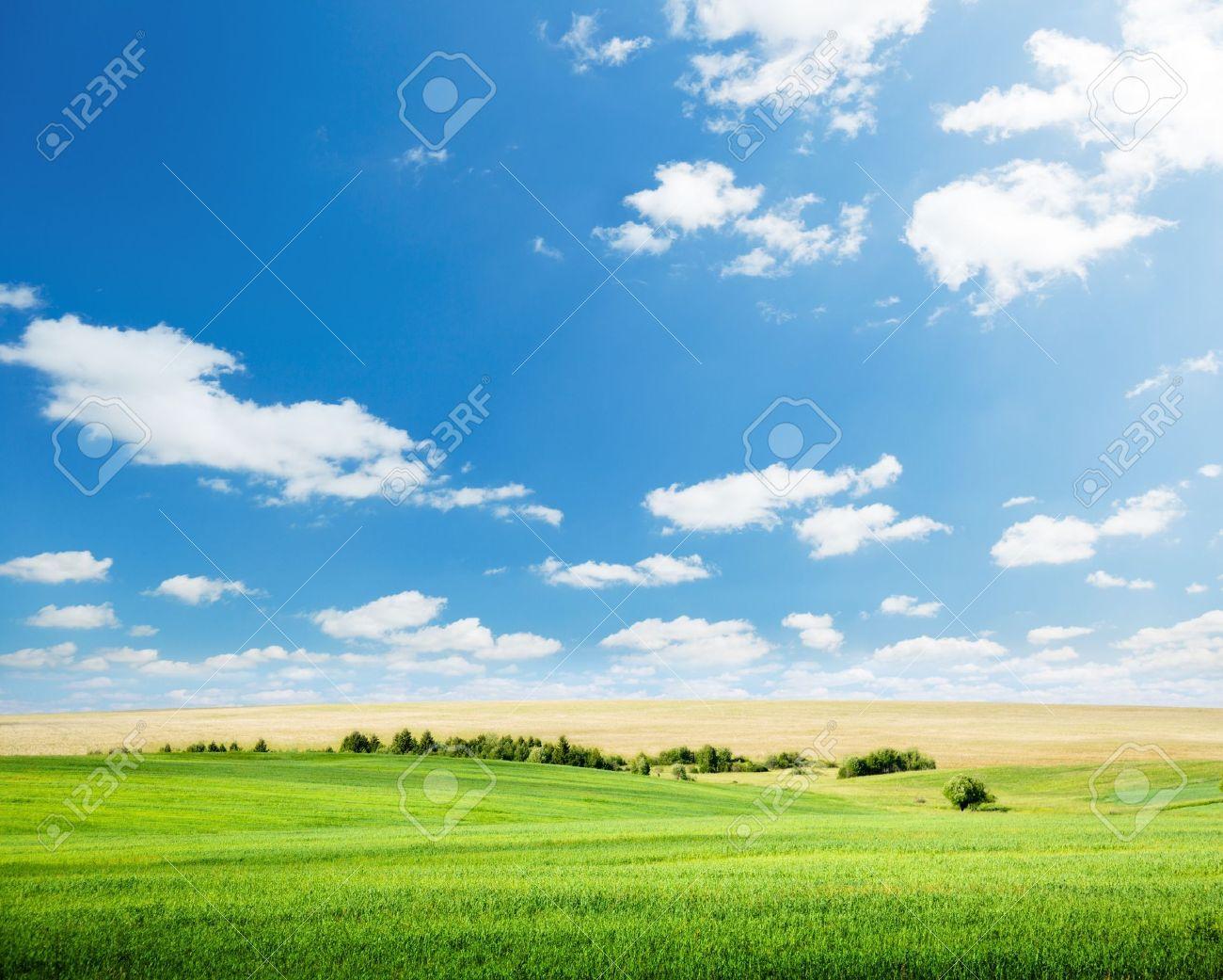 oat field and sunny sky Stock Photo - 7885225