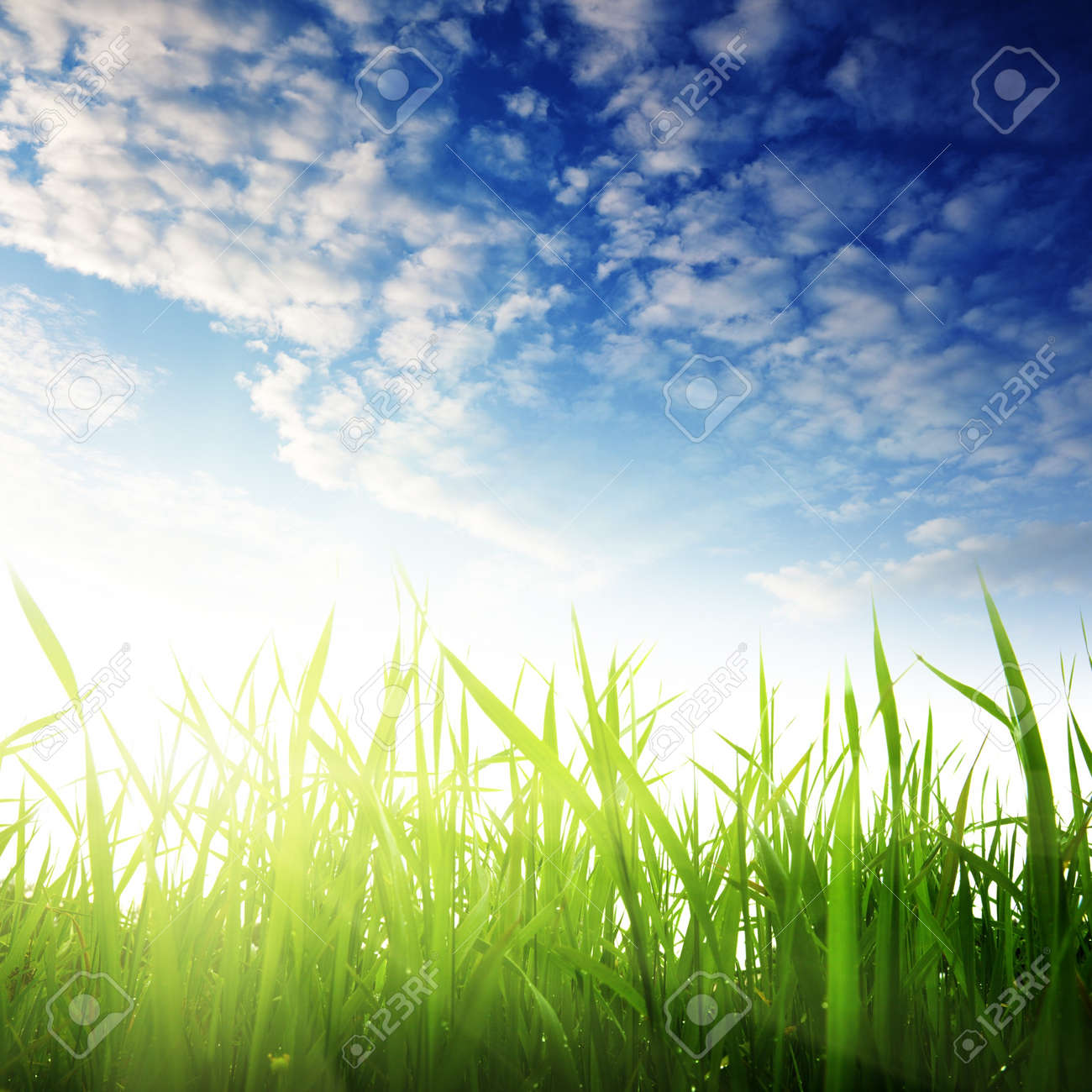 grass and sunset Stock Photo - 8084741