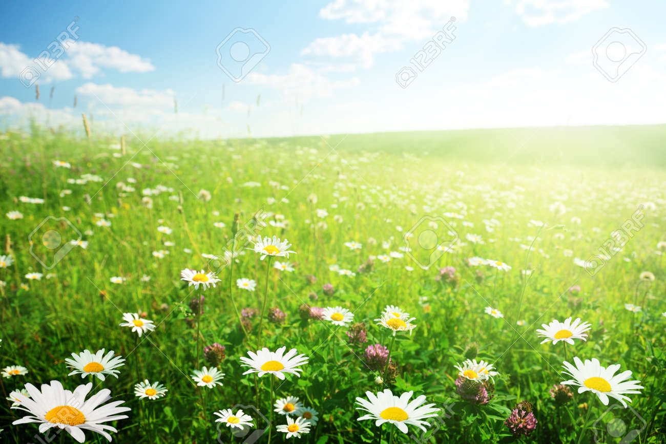field of wild flowers Stock Photo - 8347177