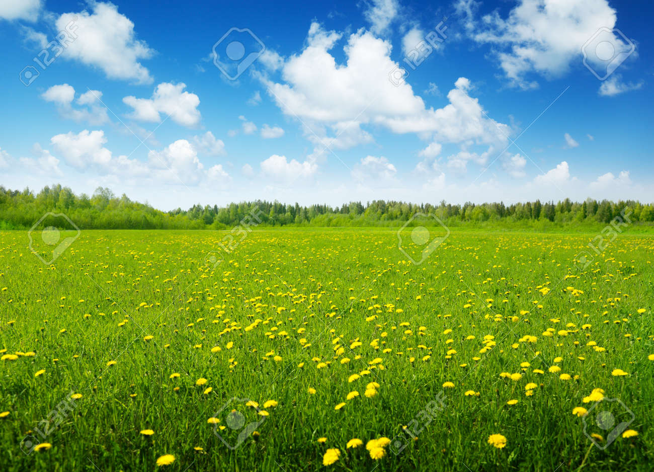 field of spring flowers and sunny day Stock Photo - 8432047