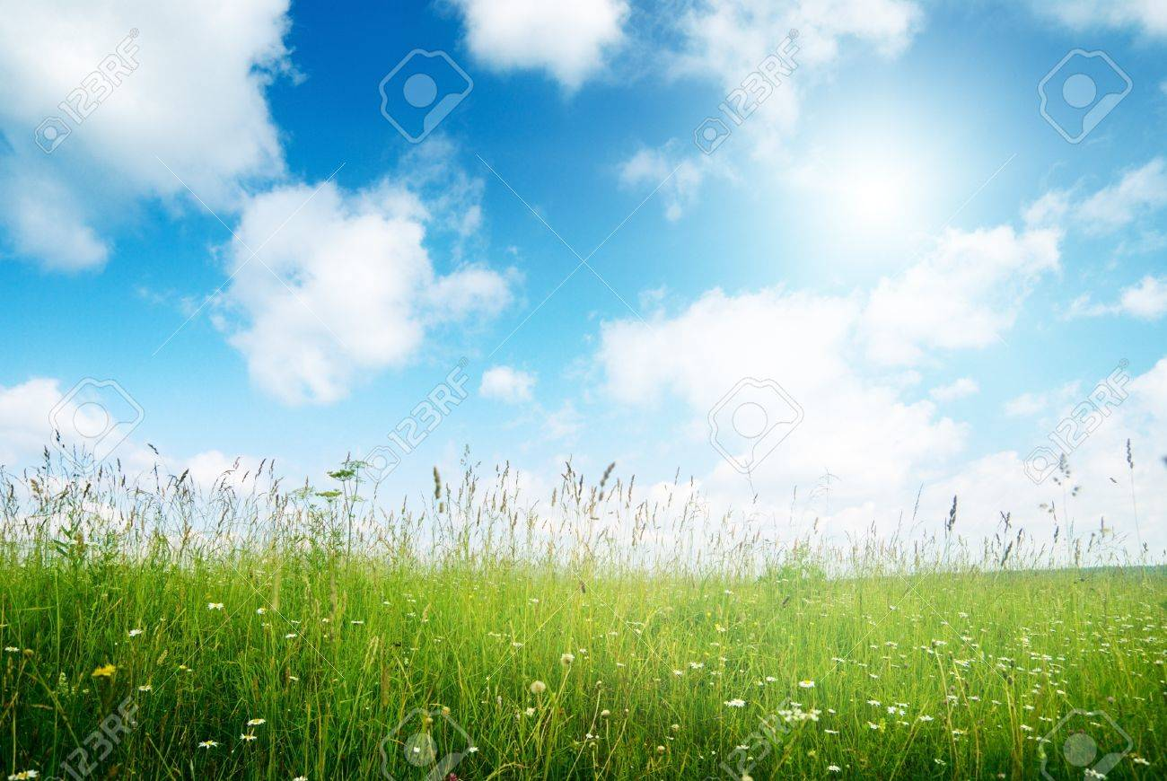 field of flowers and sunlight Stock Photo - 8432037