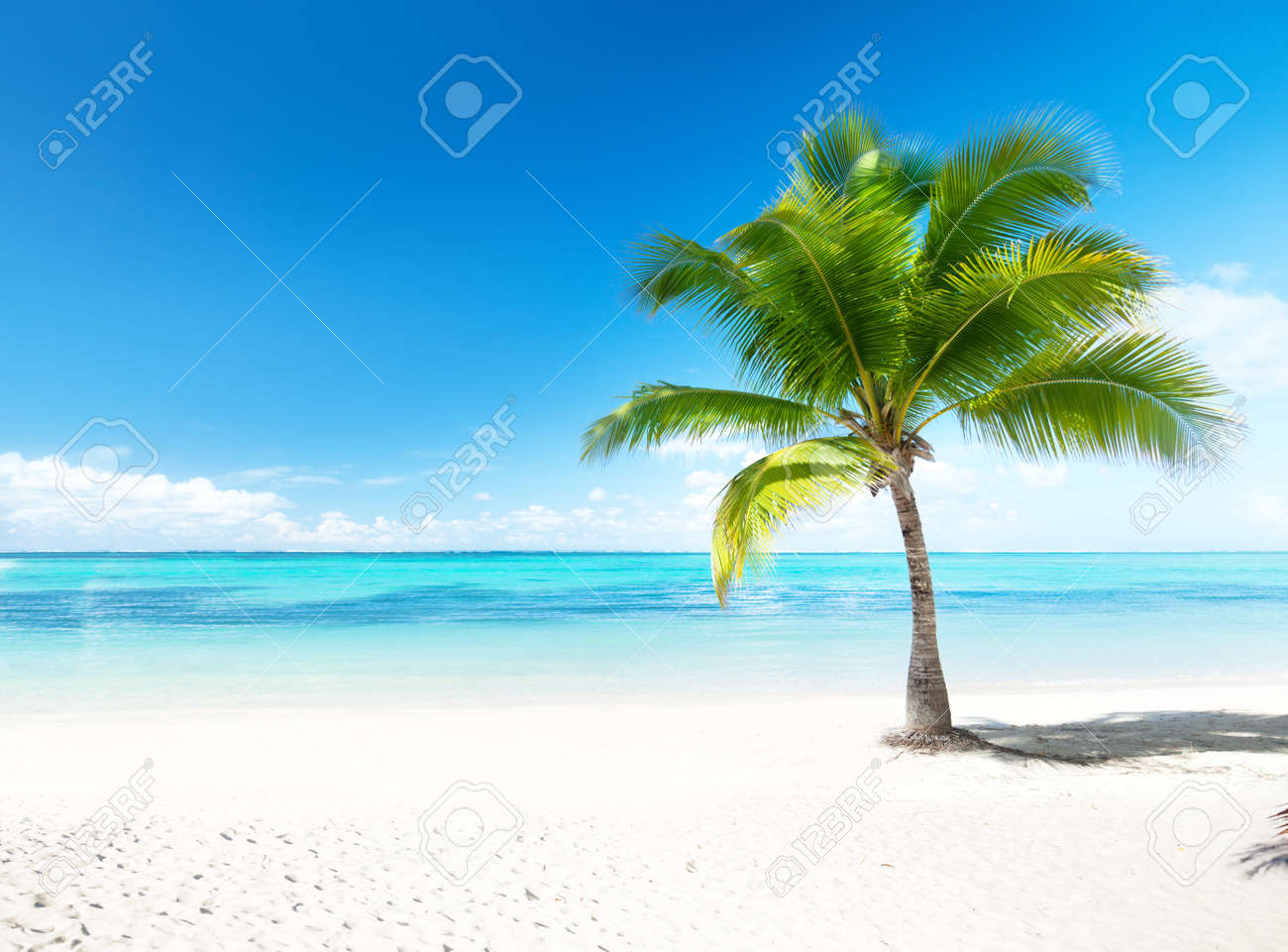 palm and beach Stock Photo - 8537765