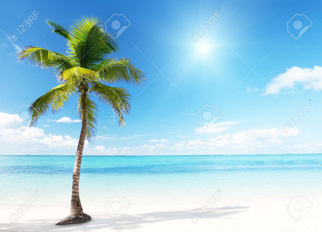 palm and beach Stock Photo - 9641799