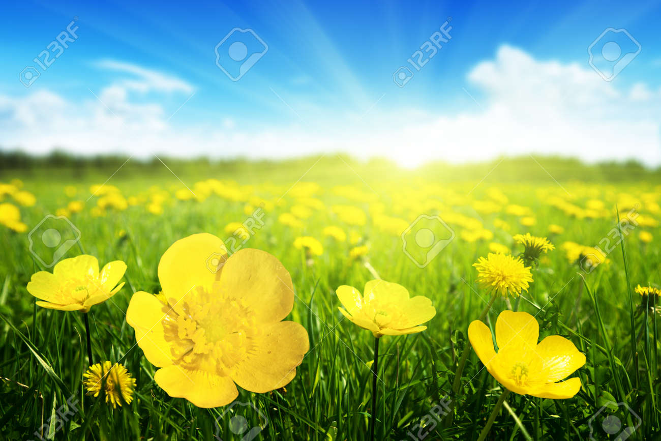 Field of spring flowers and perfect sunny day - 13494642