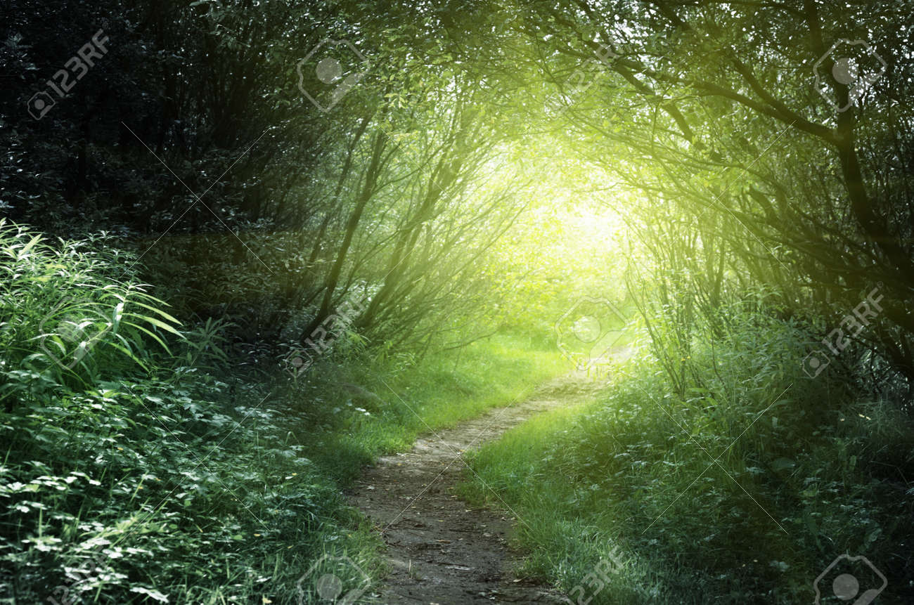 way in deep forest Stock Photo - 13494658