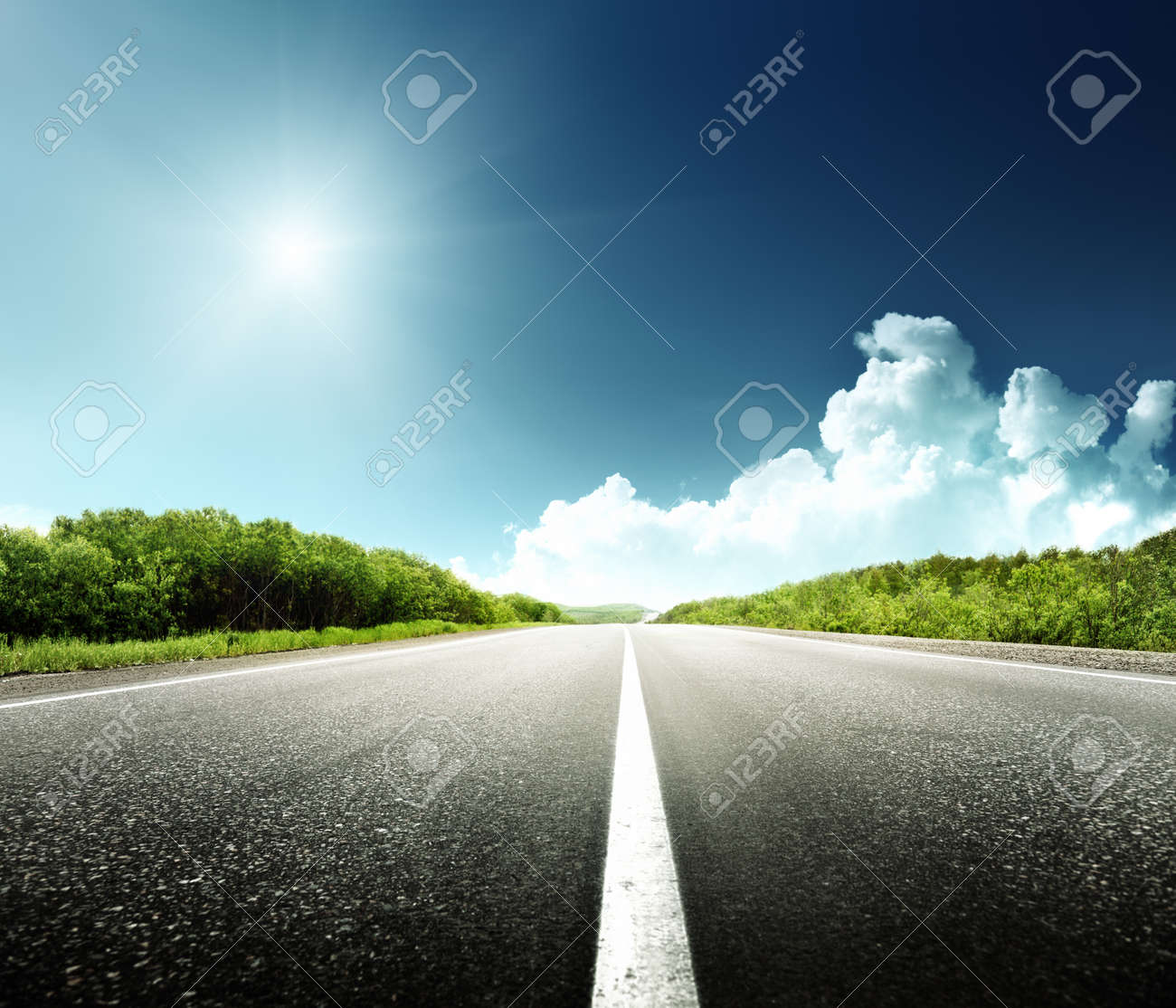 road in forest - 13546463