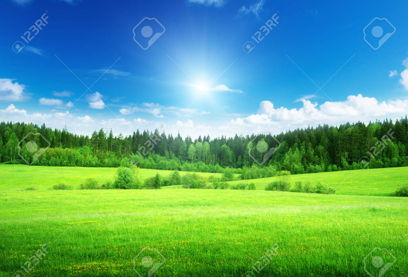 field and forest in spring time - 14839008