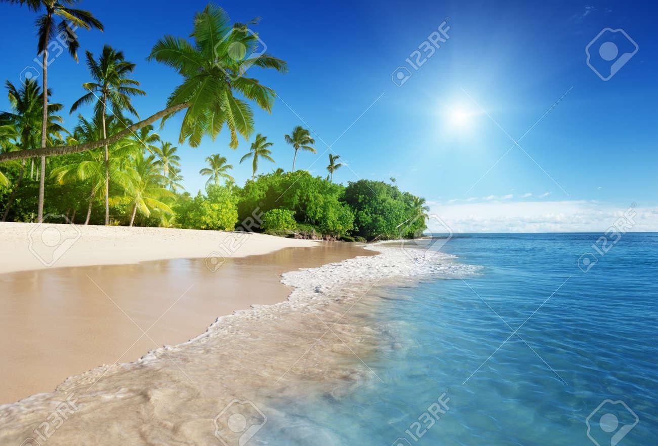 caribbean sea and palms - 16833268
