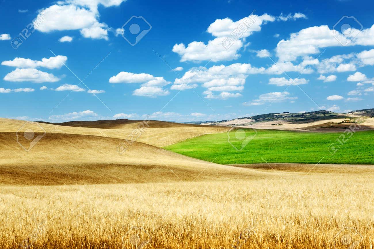 barley  hills Tuscany, Italy Stock Photo - 18124626