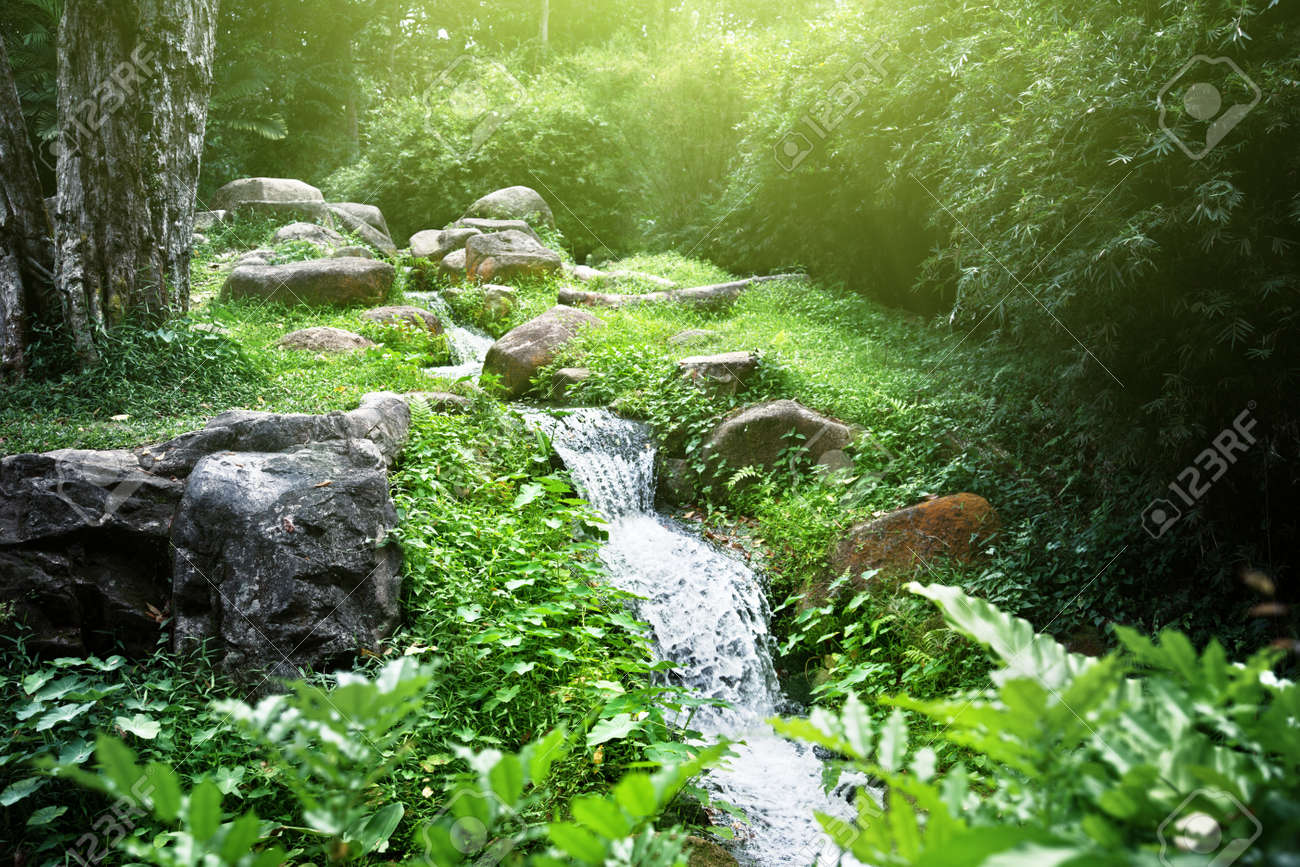 river in jungle Stock Photo - 18819043