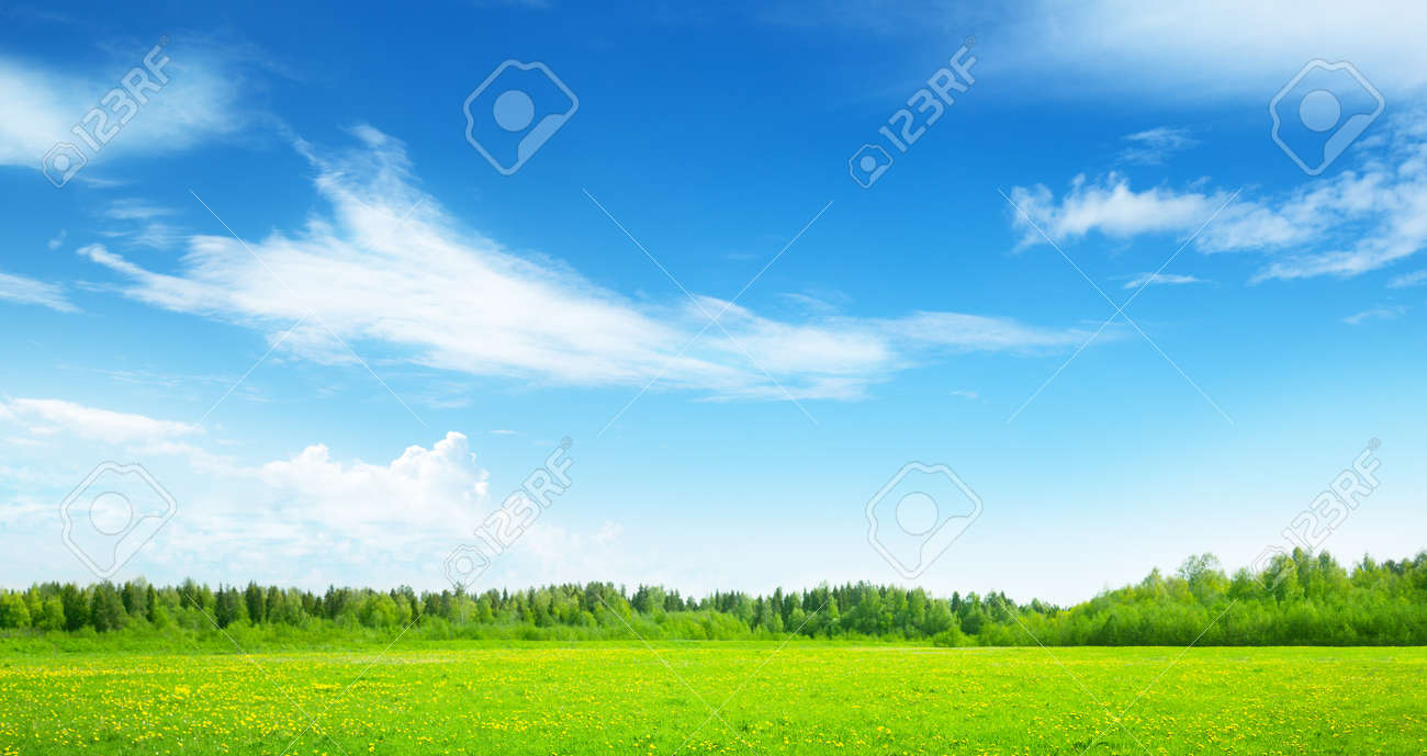 field of spring grass and perfect sky stock photo picture and