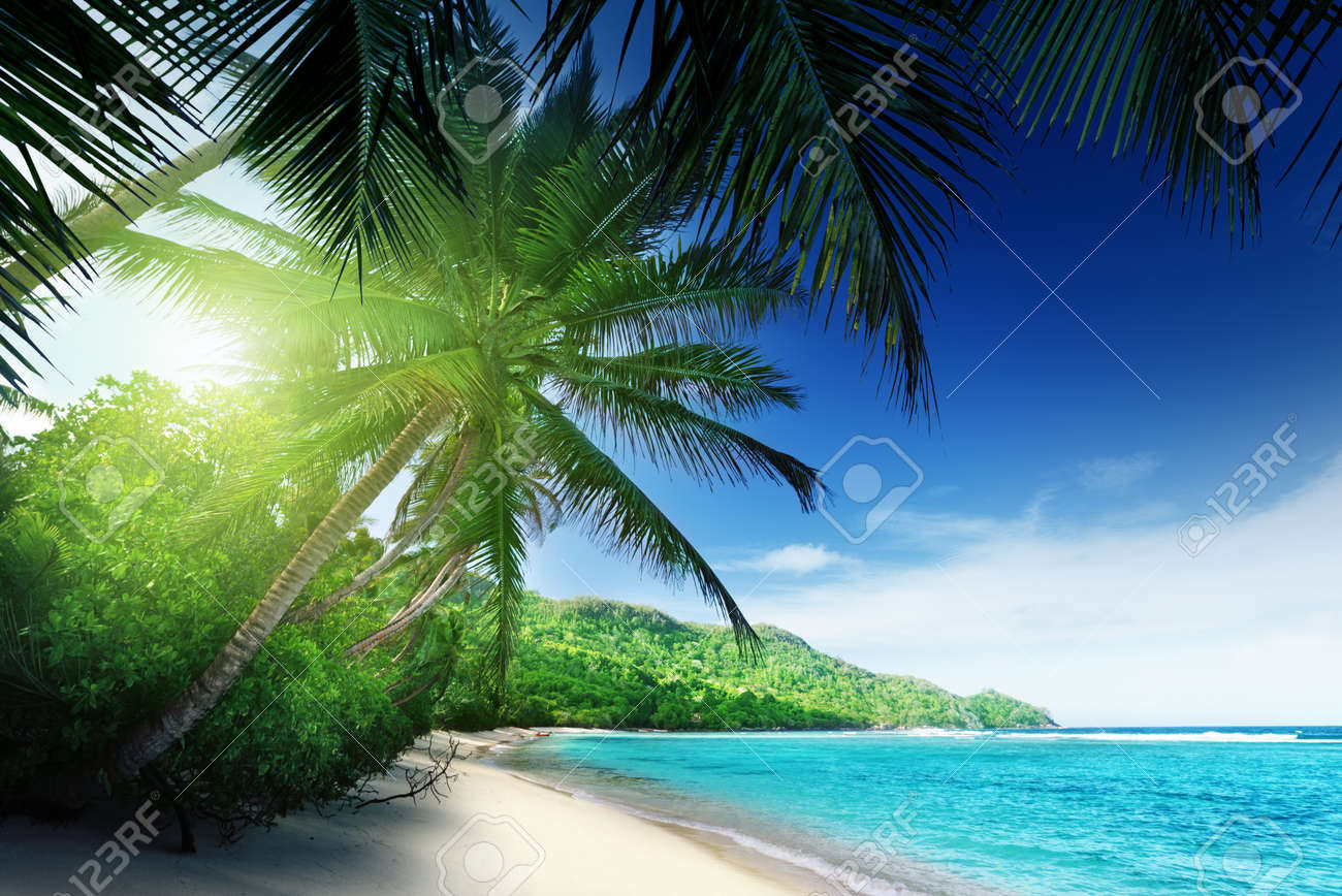 beach in sunset time on Mahe island in Seychelles - 19713445