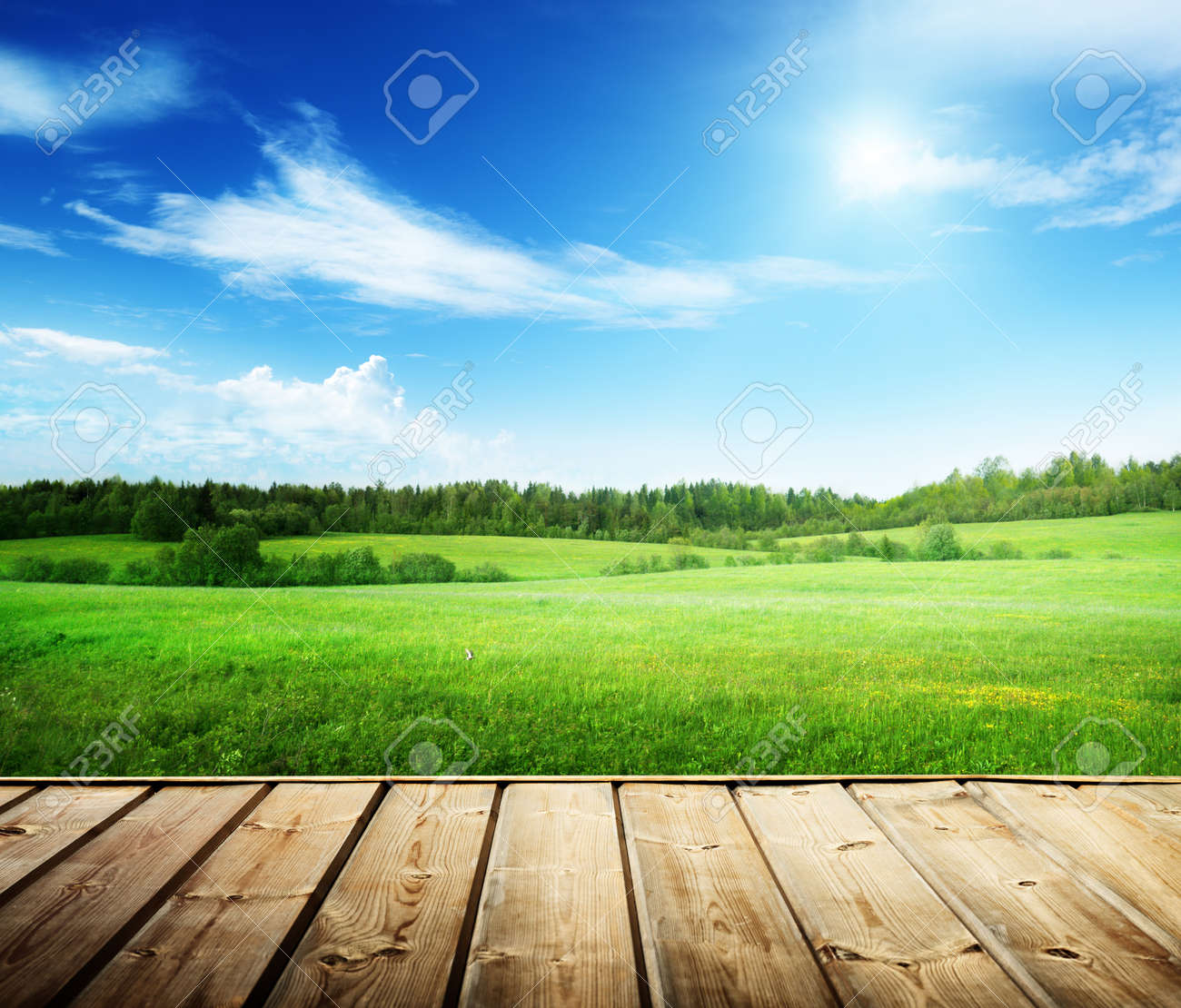 field of grass and perfect sky - 22412970