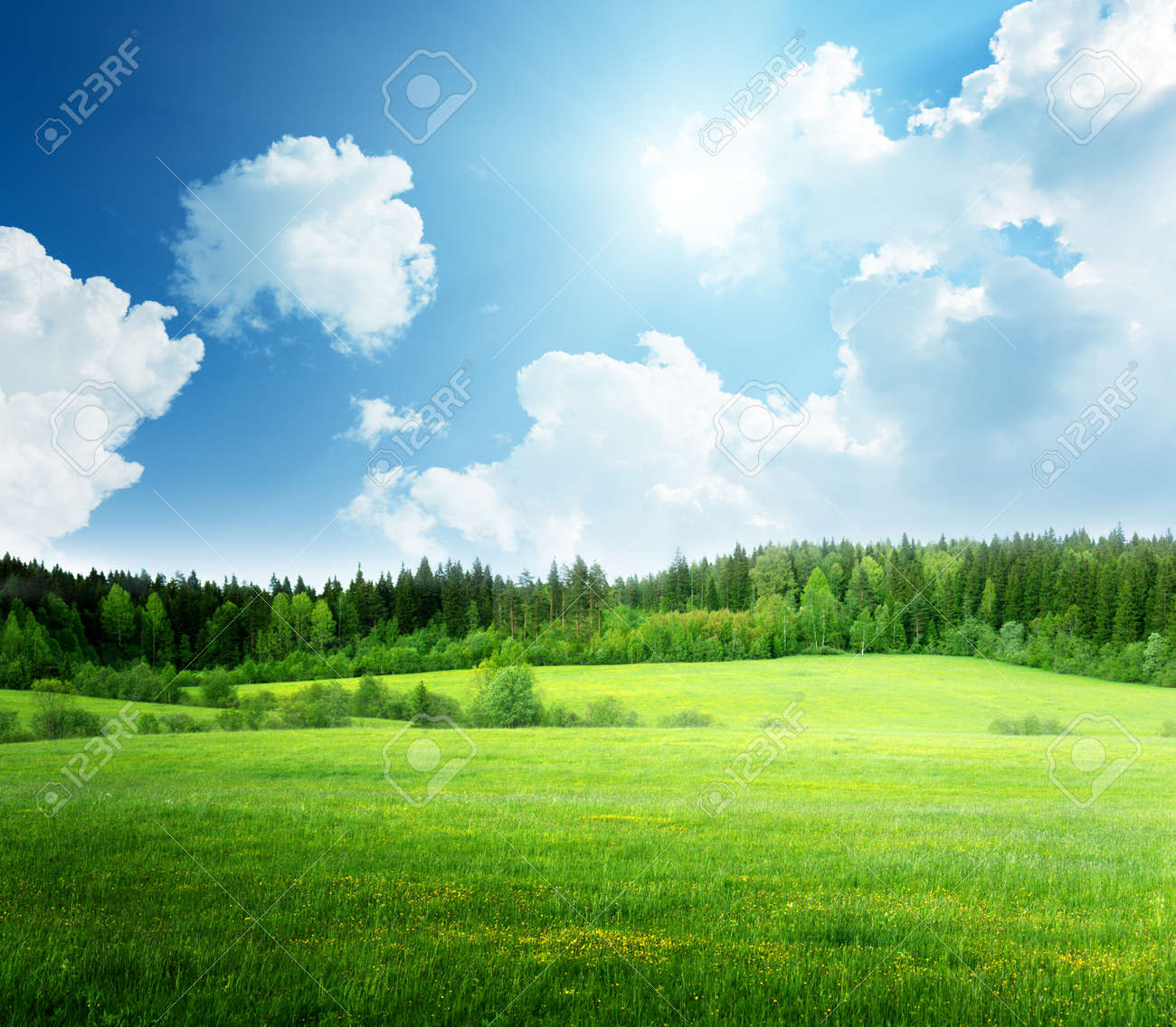 field of grass and perfect sky - 23800599