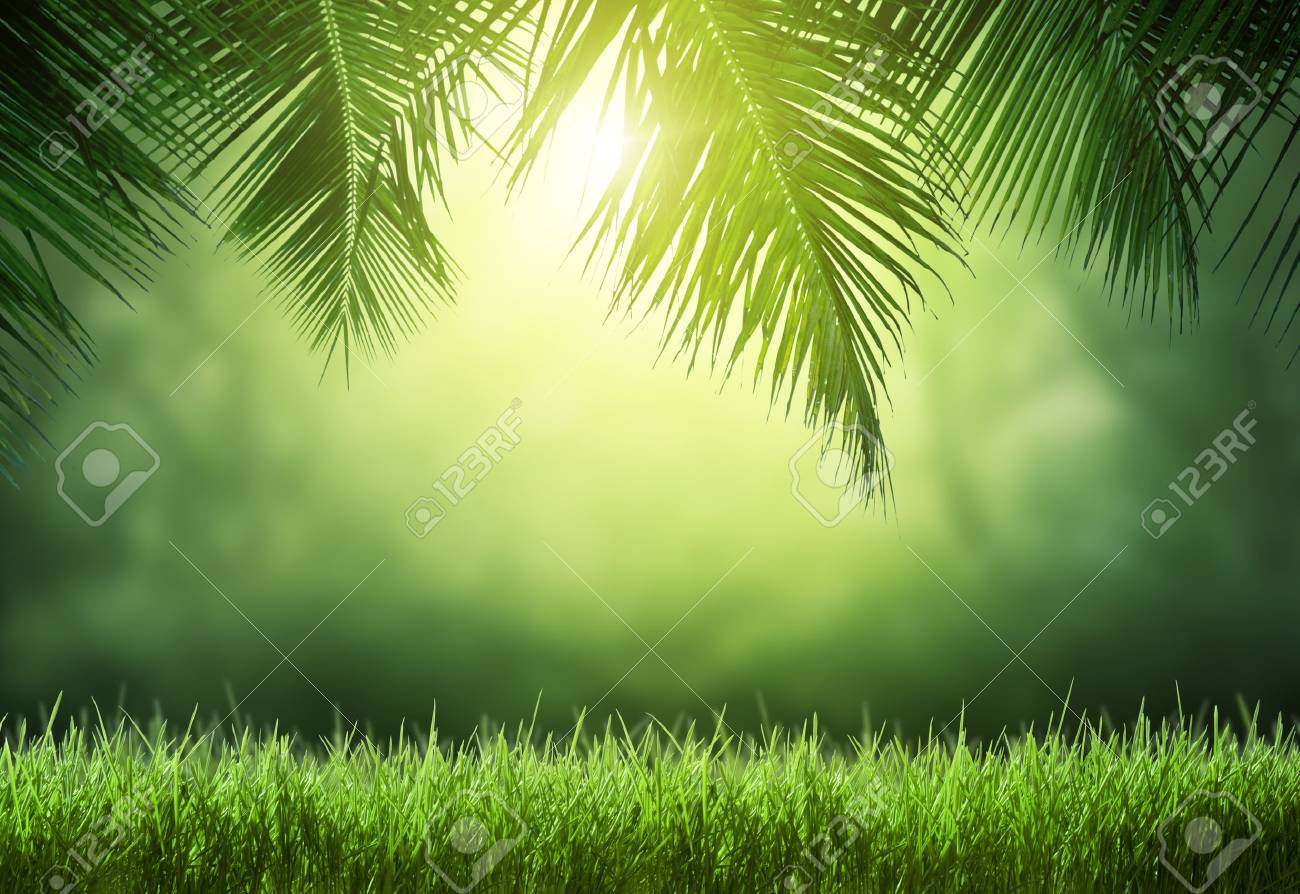 tropical forest - 51293869
