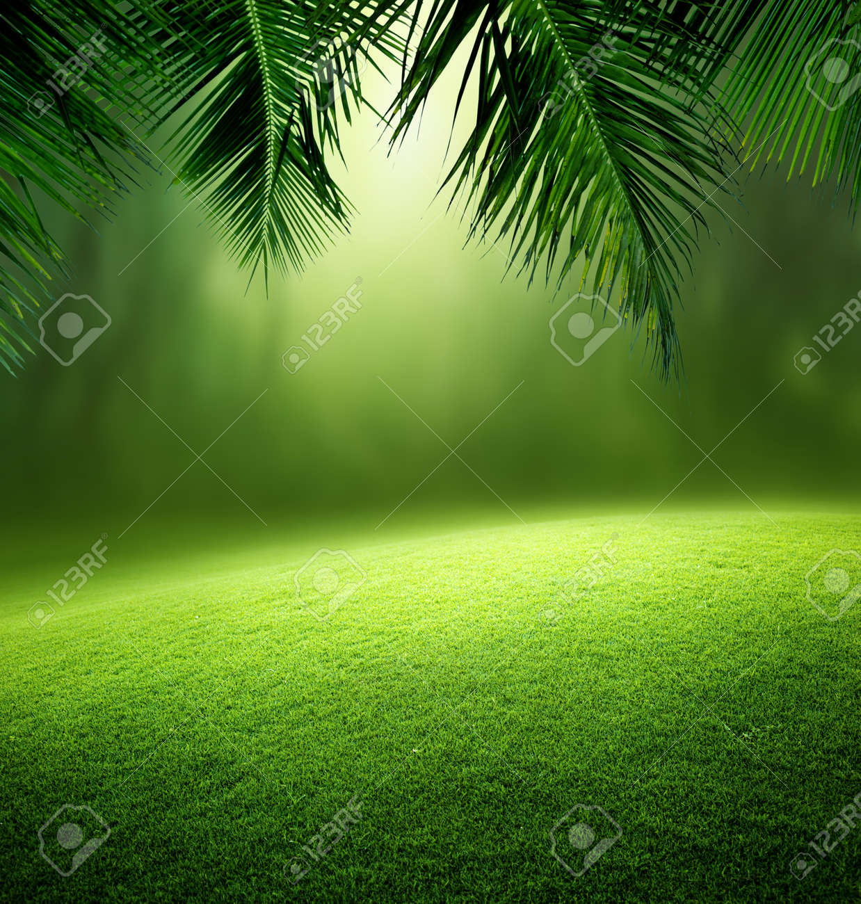 tropical forest - 53535599