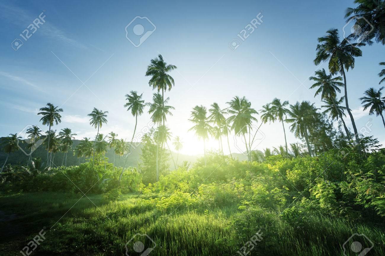 sunset in jungle, seychelles - 53695550