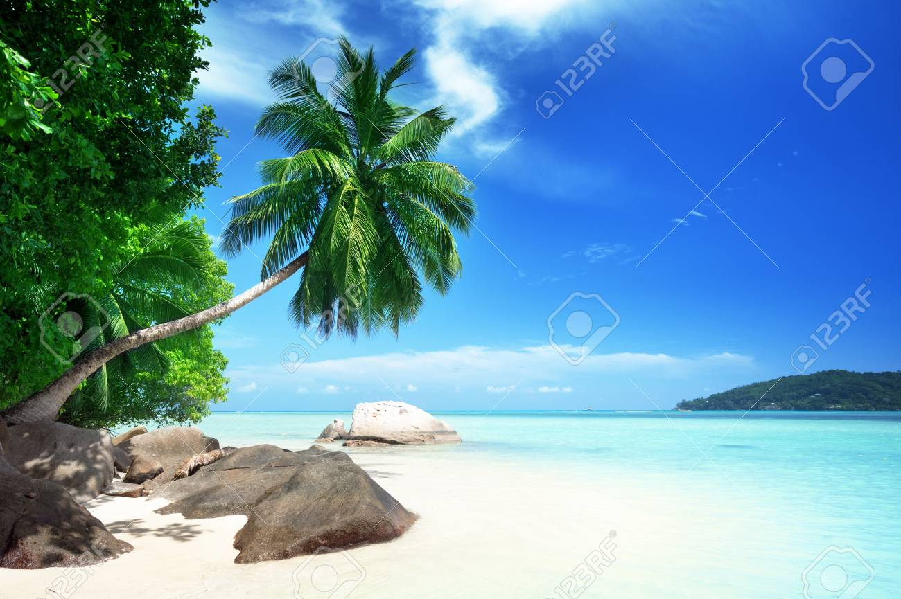 beach on Mahe island in Seychelles - 56410810