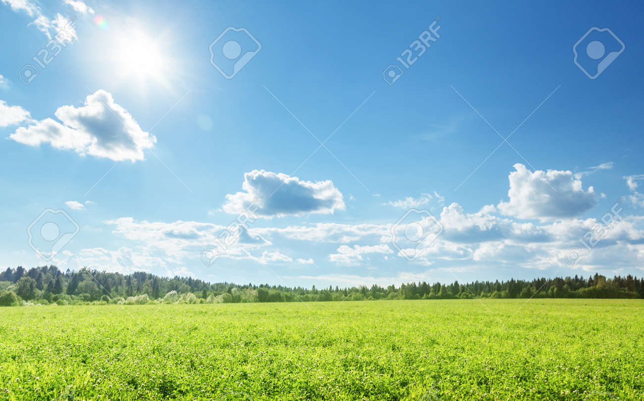 field of spring grass and perfect sky - 153718838
