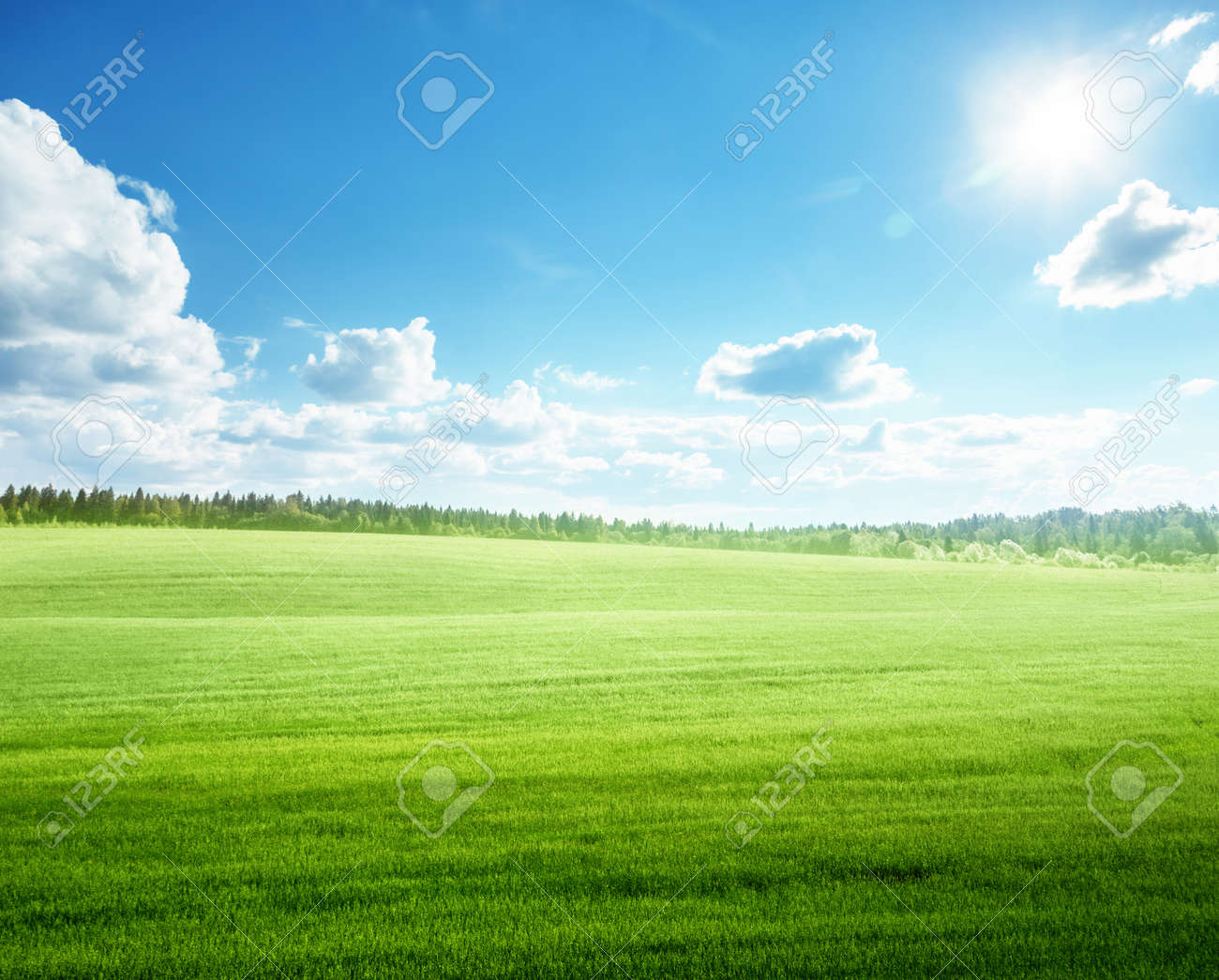 field of grass and perfect blue sky - 153902234