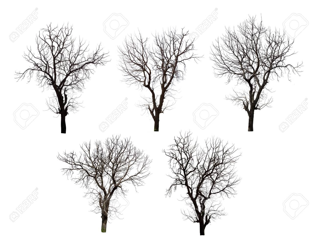 Collection of dead tree isolated on white background high resolution for graphic decoration, suitable for both web and print media - 91805949