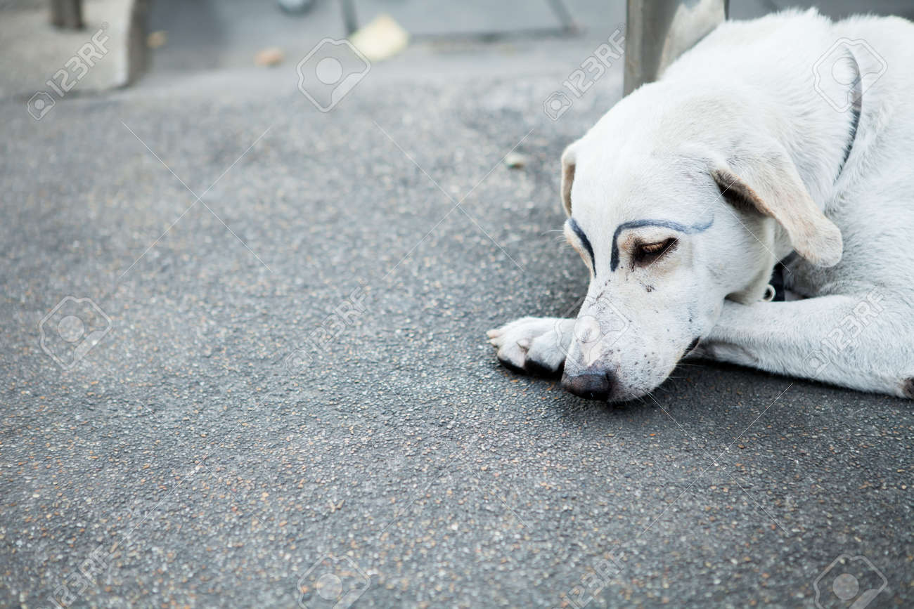 White Dog Was Faking Draw Eyebrows On Street Stock Photo Picture