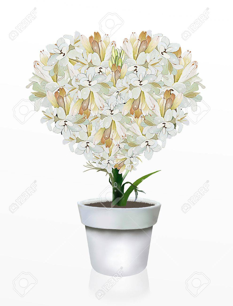 A Beautiful Heart Shape of White Tuberose Flowers in Flowerpot, on A White Background Stock Photo - 14730580