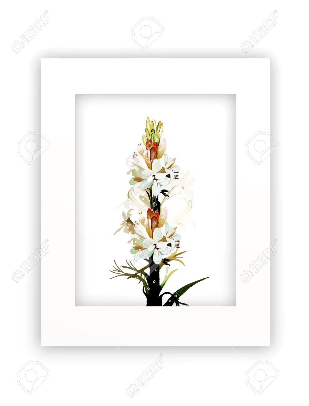 A Beautiful White Tuberose Flowers In A Vertical Frame Islated