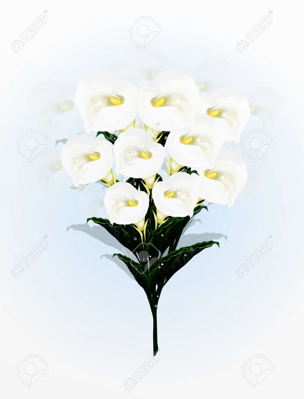 A Beautifully Calla Lilies Flower In Bouquet A Simple And Elegant