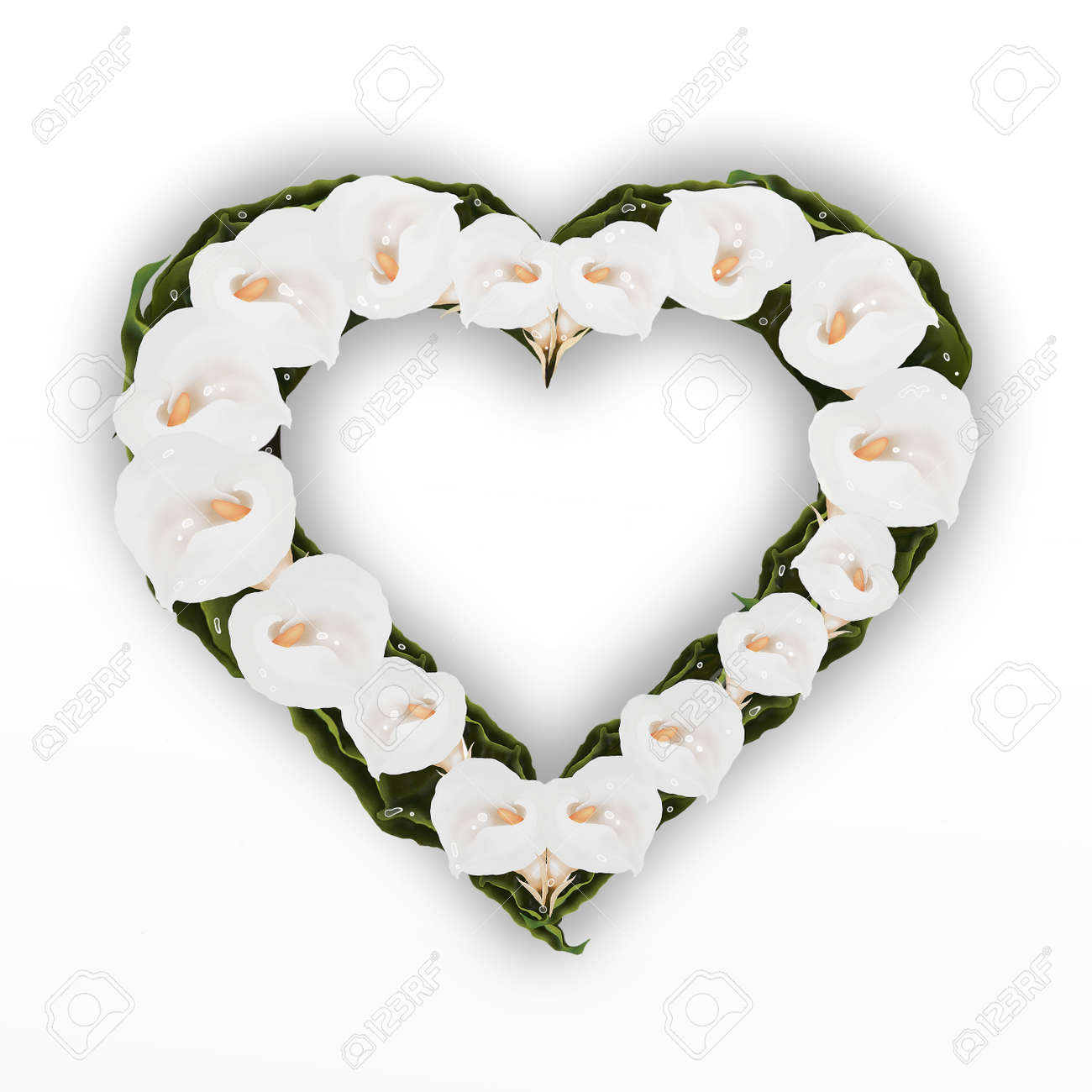 A Beautifully Heart Frame Of White Calla Lily Flower, Isolated ...