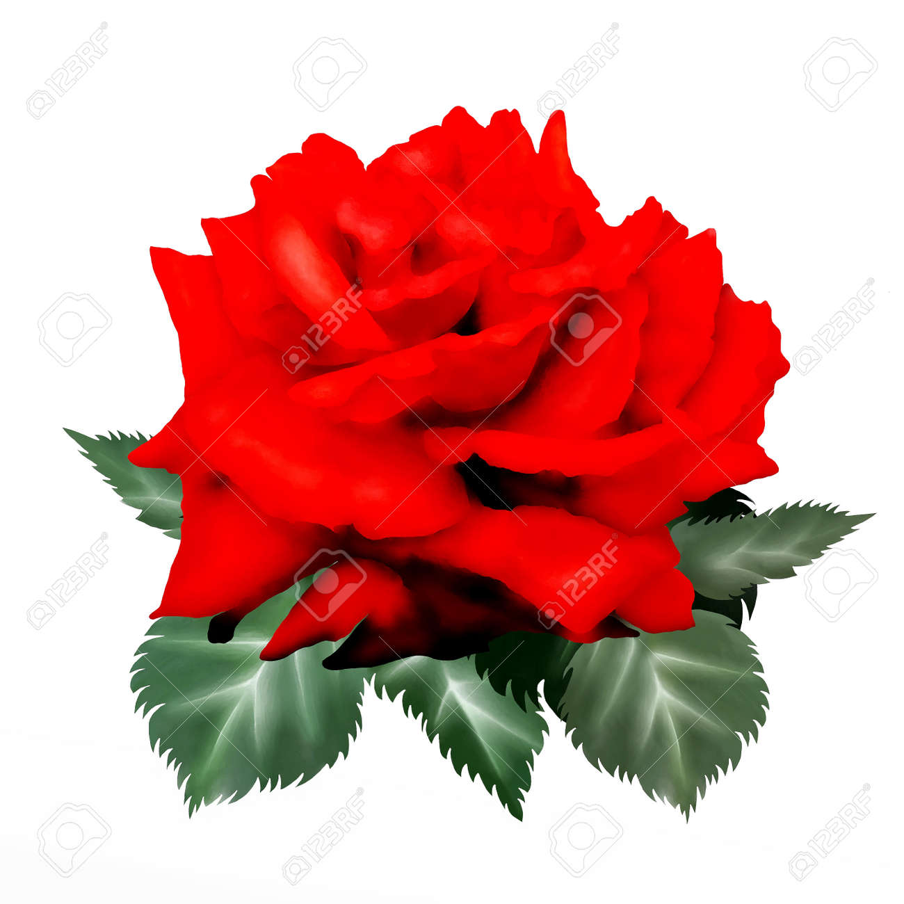 Un Symbole De L Amour Dessin A La Main D Une Belle Rose Rouge Close