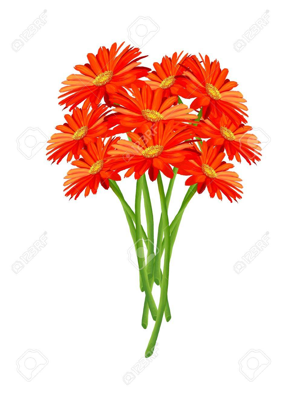 Hand Drawing, Close Up of A Bouquet of Bright and Beautiful Gerbera Daisy Isolated on White Background - 16119463