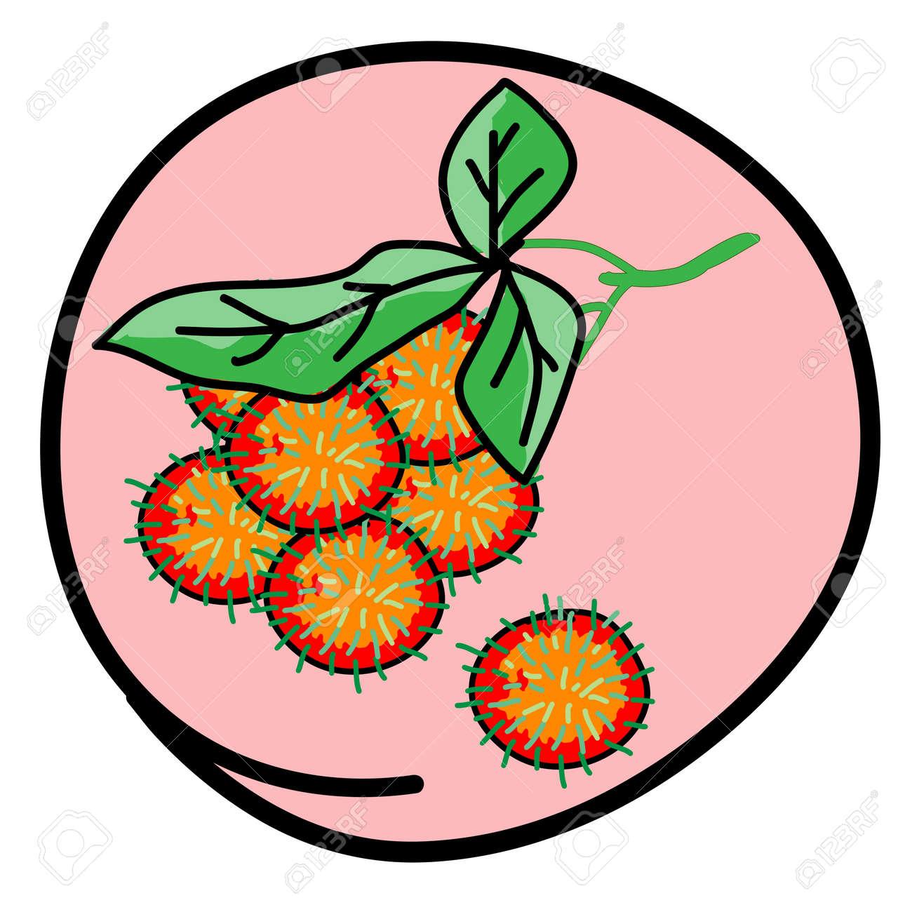 Fresh Fruits, A Cartoon Illustration Bunch of Fresh Red Rambutan in Pink Circle Frame Stock Vector - 17544210