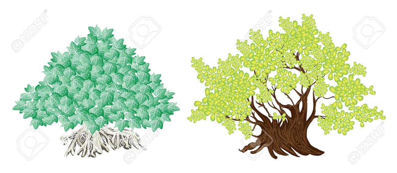 Un Ensemble Illustration Des Symboles Arbre Arbres Amenagement Paysager Ou Isometriques Et Des Plantes La Variete Des Plantes Et Des Arbres A