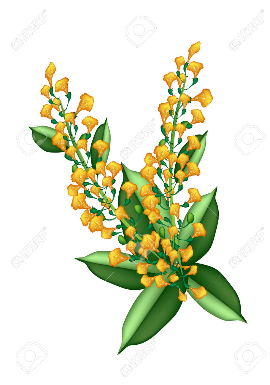 Beautiful flower an illustration yellow color of padauk flower beautiful flower an illustration yellow color of padauk flower or papilionoideae flower isolated on white izmirmasajfo