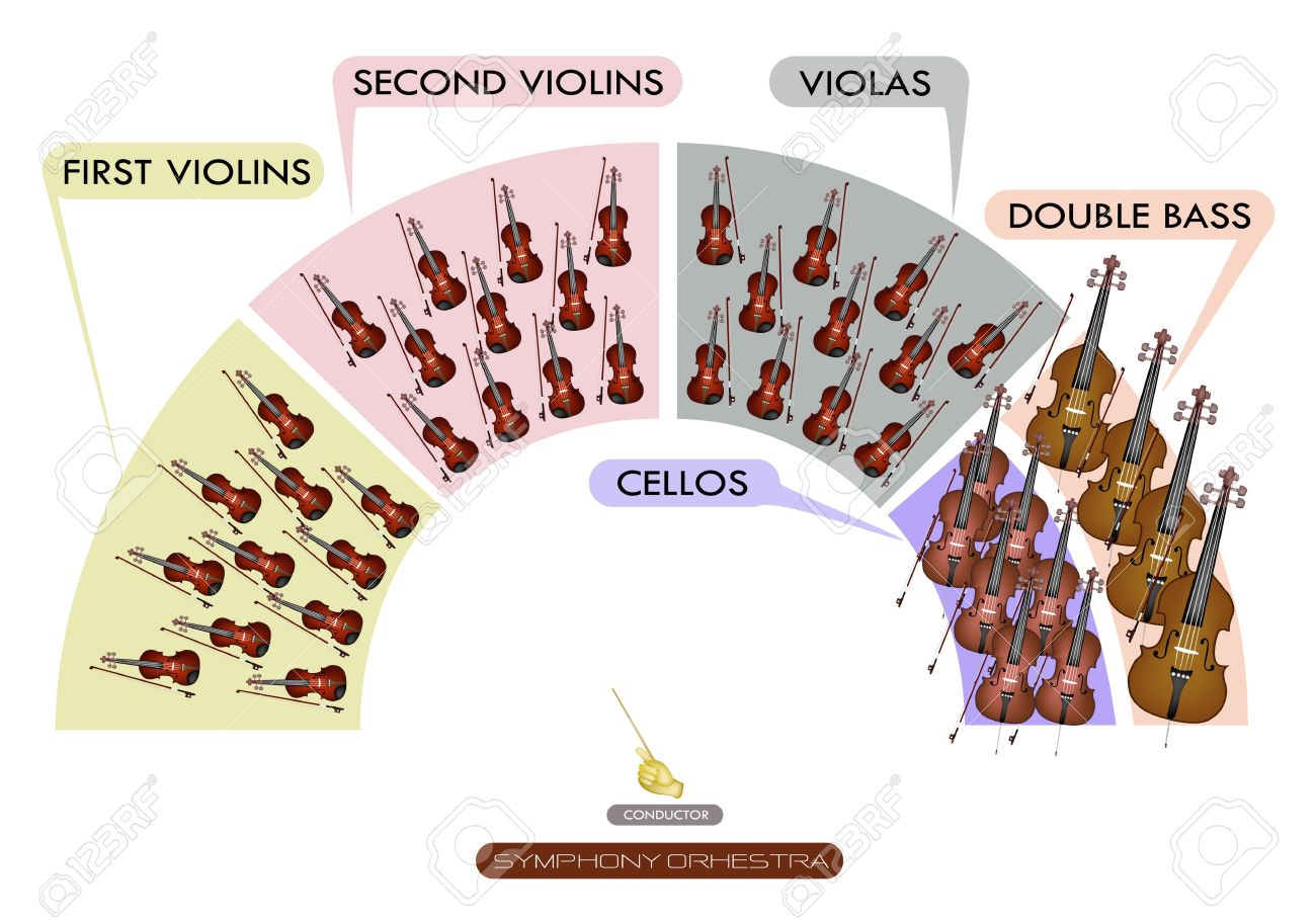 Illustration Collection Of Different Sections Of String Instrument ...