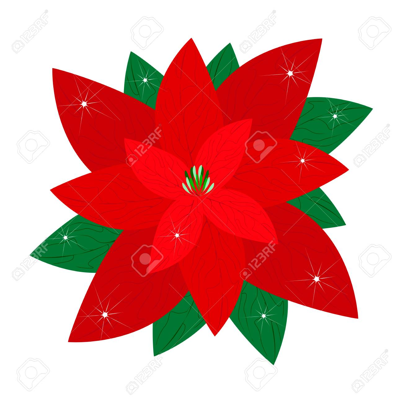 a beautiful christmas poinsettia flower isolated on white background rh 123rf com free clipart poinsettia flowers free poinsettia clip art images