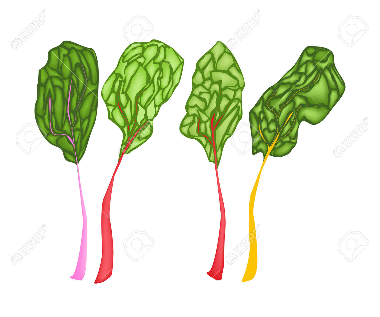 Vegetable Vector Illustration Of Delicious Fresh Rainbow Swiss Royalty Free Cliparts Vectors And Stock Illustration Image 26796355