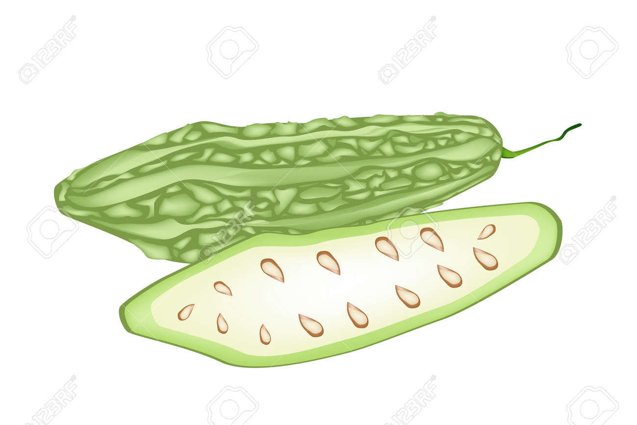 vegetable and herb vector illustration of whole and half balsam rh 123rf com guard clip bosch hedge trimmer 7000-prot gourd clipart free