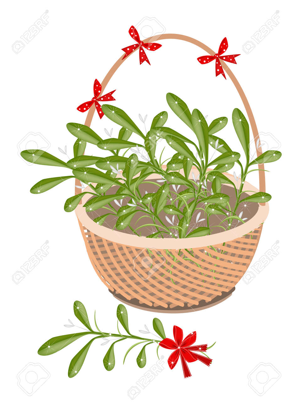 A symbol of love and luxury an illustration of mistletoe bunch a symbol of love and luxury an illustration of mistletoe bunch or viscum album with biocorpaavc